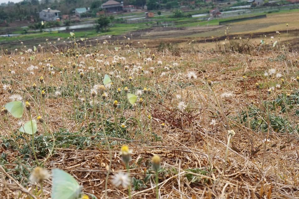 hoa mùa khô